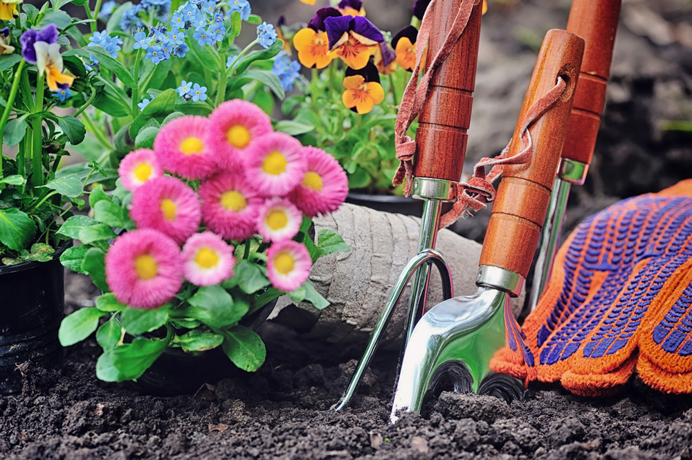 gardening tips with master groups sydney north shore