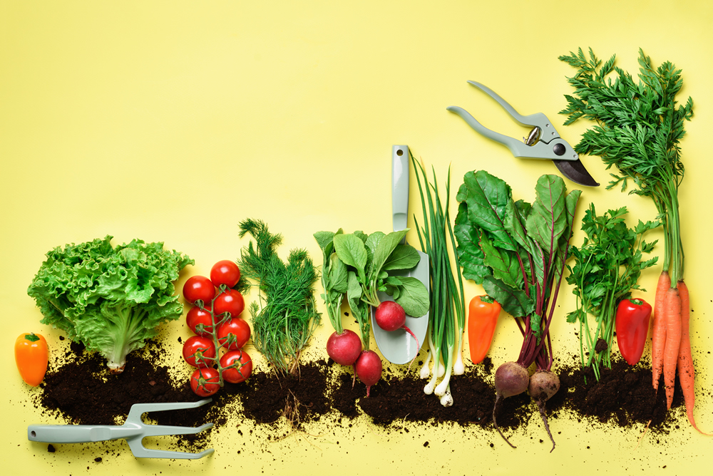 organic-vegetables-and-garden